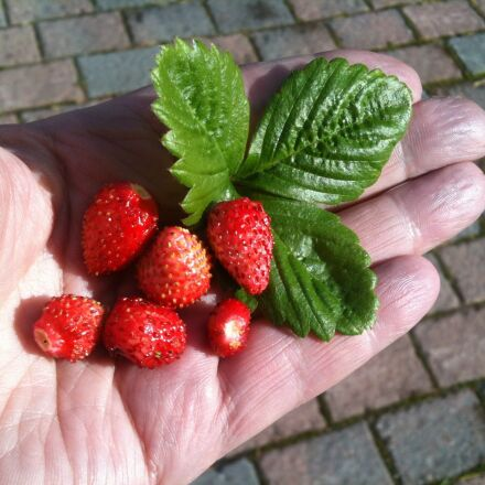 wild strawberry, hand, summer, Apple iPhone 3GS