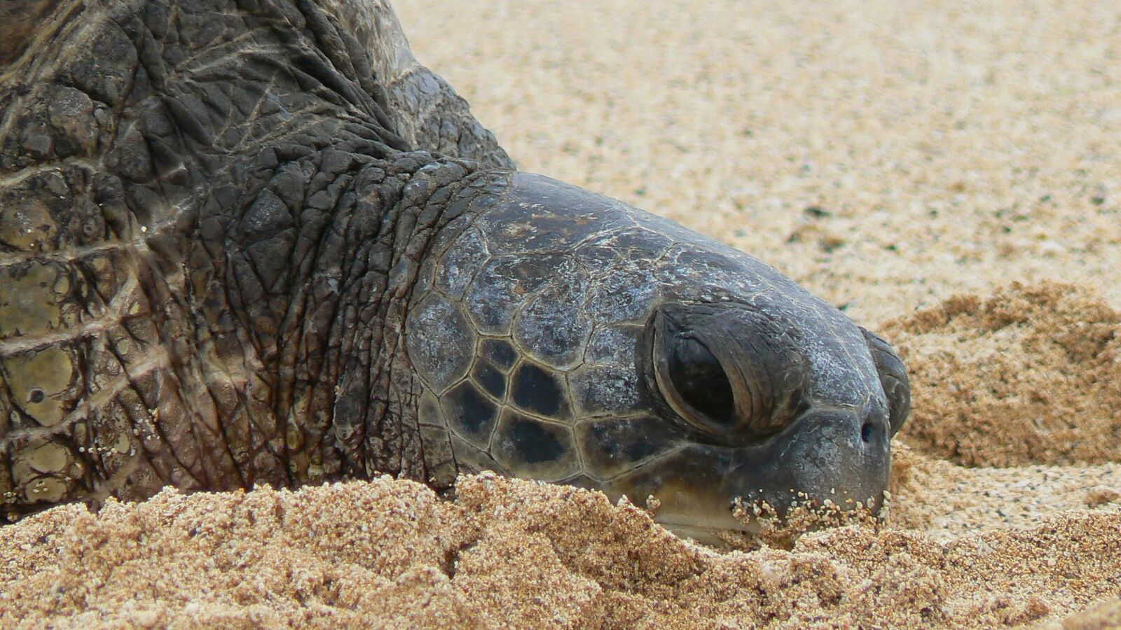 "Panasonic DMC-FZ7 sample photo. ""Turtle, beach, sea turtle"" photography"