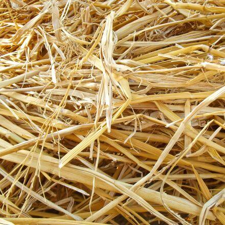 hay, dried up, natural, Fujifilm FinePix S2980