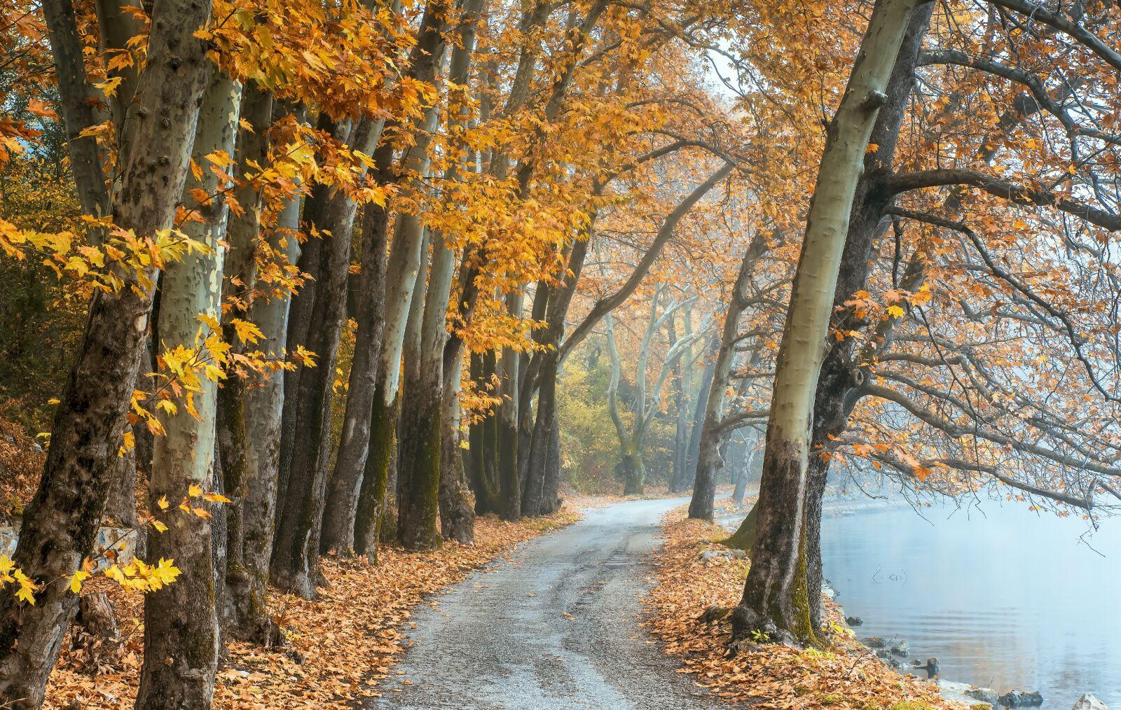 "Nikon D750 sample photo. ""Autumn, fall, sunrays"" photography"