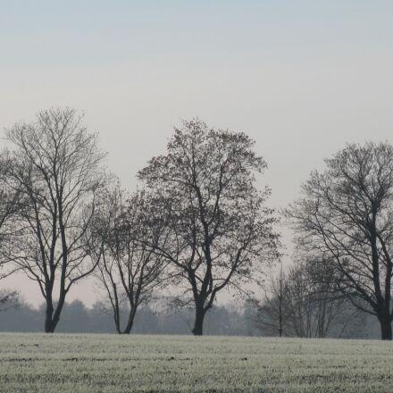 bald trees, winter, trees, Canon DIGITAL IXUS 990 IS