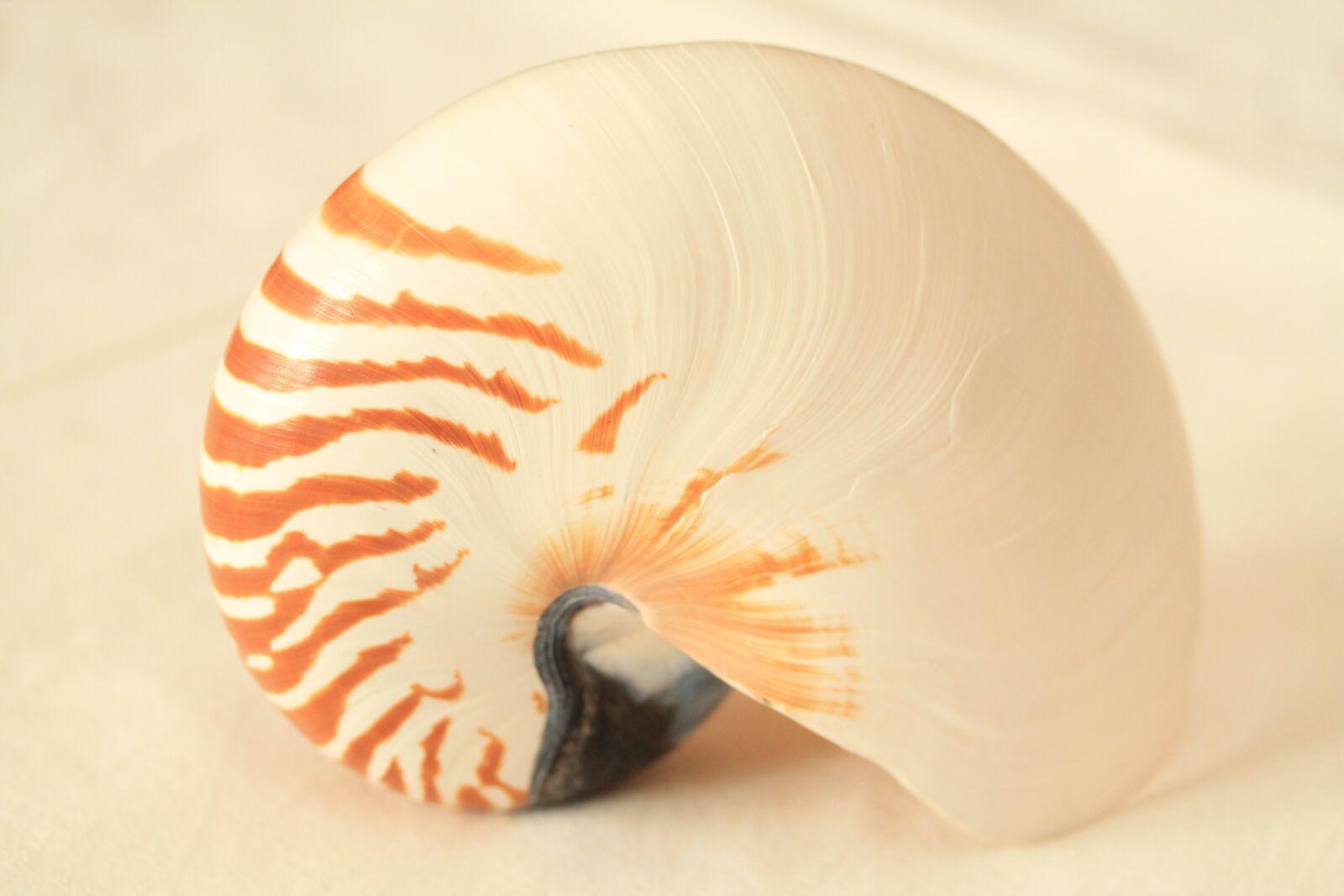 "Canon EOS 1100D (EOS Rebel T3 / EOS Kiss X50) sample photo. ""Nautilus, conch, shells"" photography"