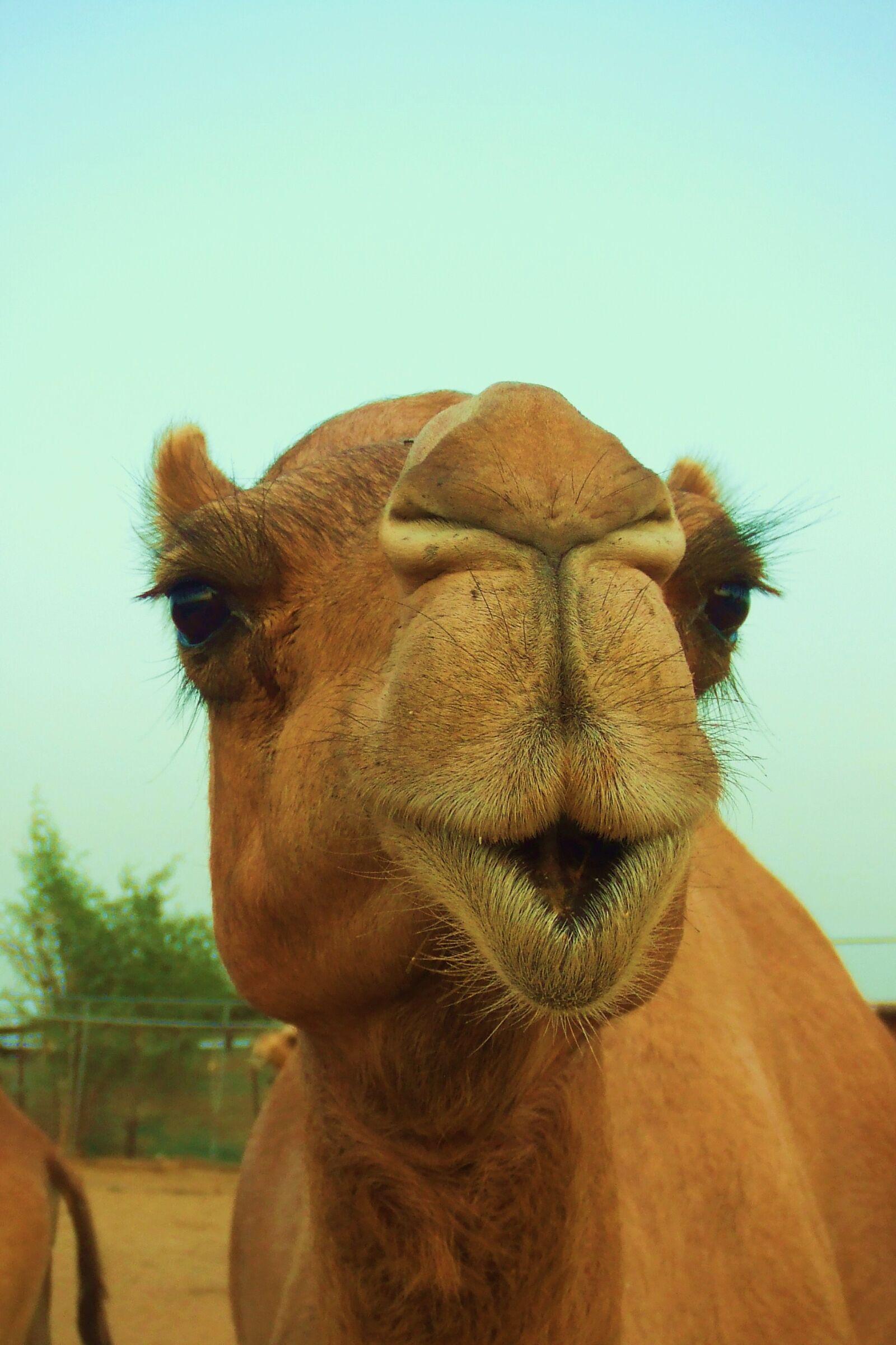 "Fujifilm FinePix Z2 sample photo. ""Animal, mammal, nature"" photography"