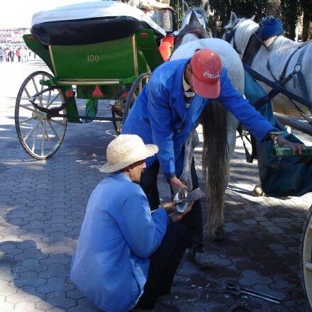 shoeing, marrakesh, horse, Sony DSC-W17