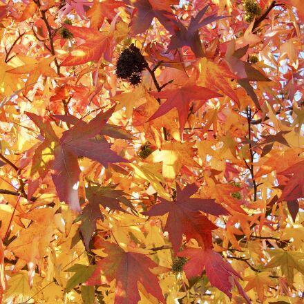 leaves, autumn, o, Olympus E-M5