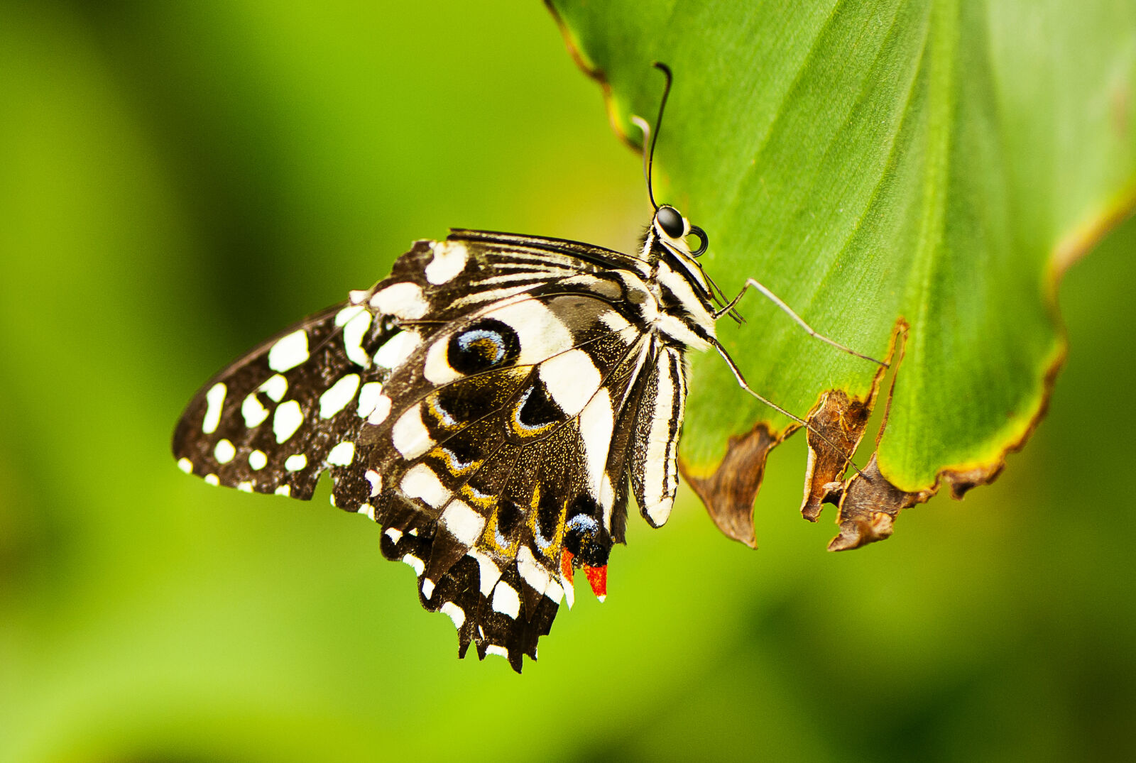 """Nikon D700 sample photo. """"Butterfly, close, up, insect"""" photography"""