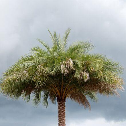 palm tree, florida, trees, Panasonic DMC-FZ60