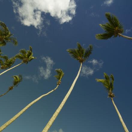 sky, palms, blue, sky, Canon EOS REBEL T2I