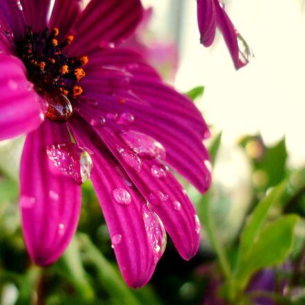 flower, nature, plant, Panasonic DMC-FS62