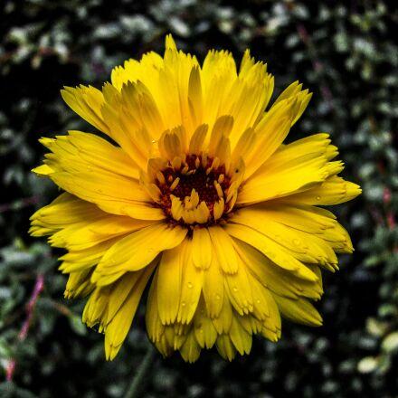 flower, yellow, yellow flower, Fujifilm FinePix S100FS