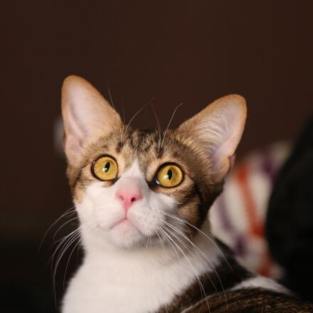 cat, pet, animal, Canon EOS 5D MARK III