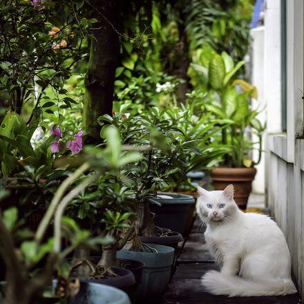 cat, nature, animal, Fujifilm X-A1