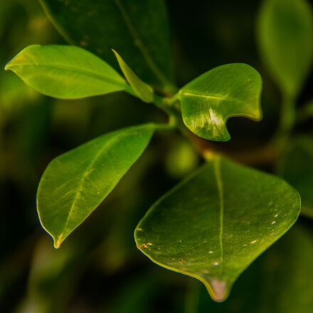 green, leaves, spring, Canon EOS 700D