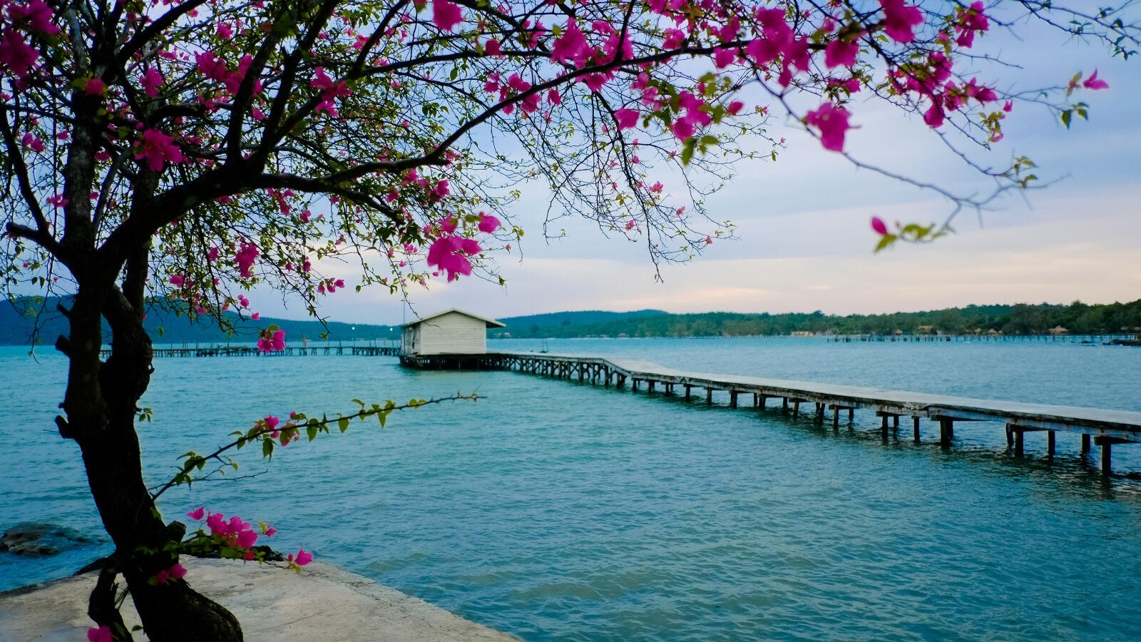 "Fujifilm X-E1 sample photo. ""Beach, cambodia, flower, koh"" photography"