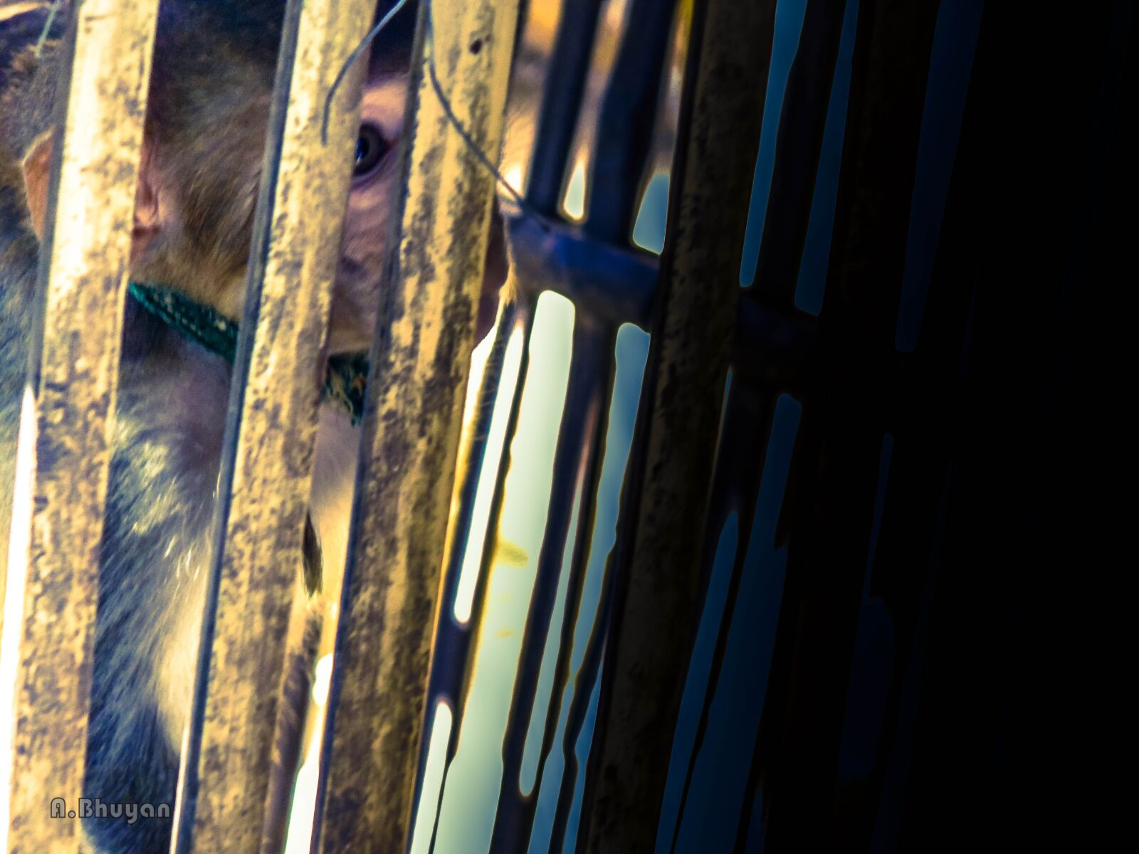 "Sony DSC-H100 sample photo. ""Monkey, animal, mammal"" photography"
