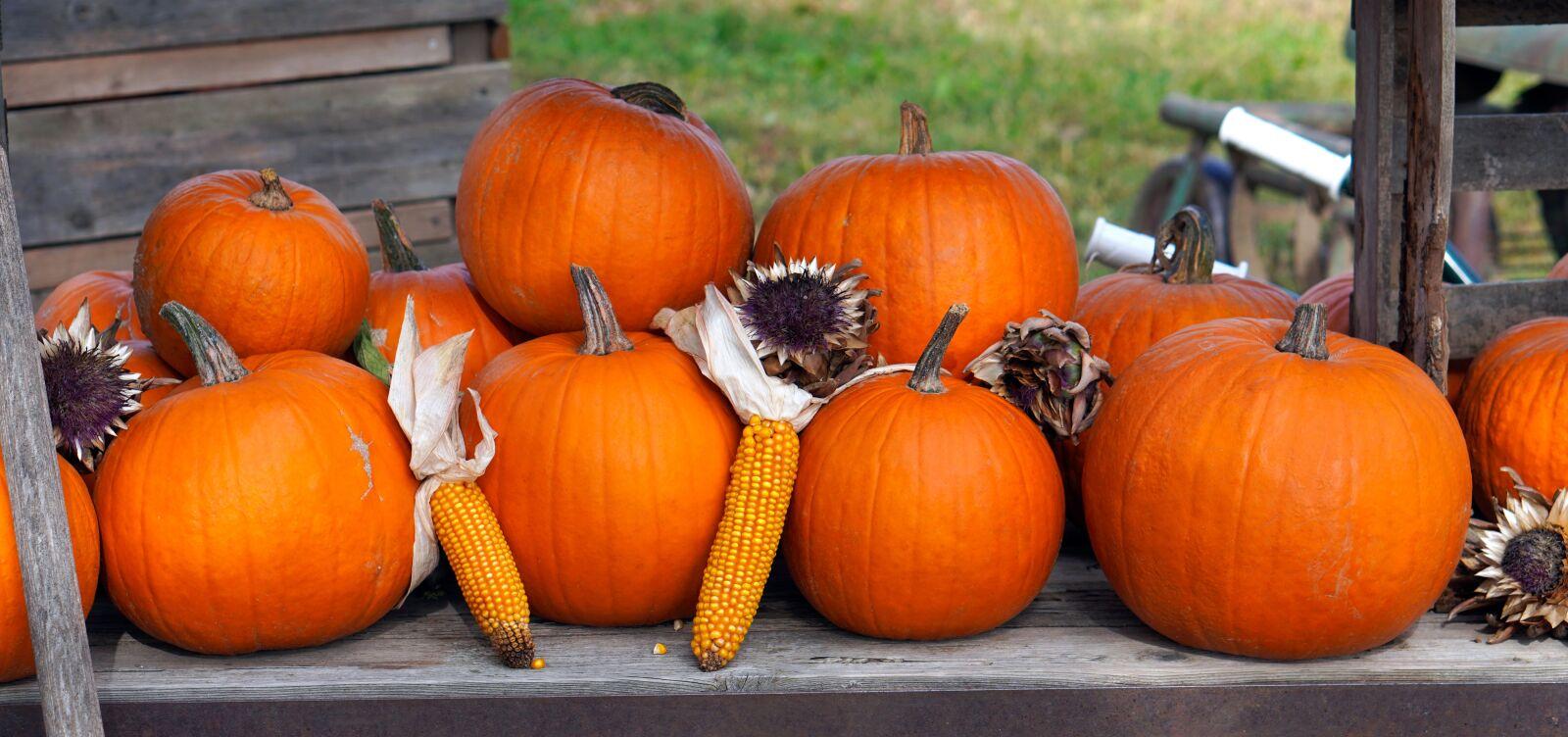 "Sony a6400 sample photo. ""Pumpkin, fruit, autumn"" photography"