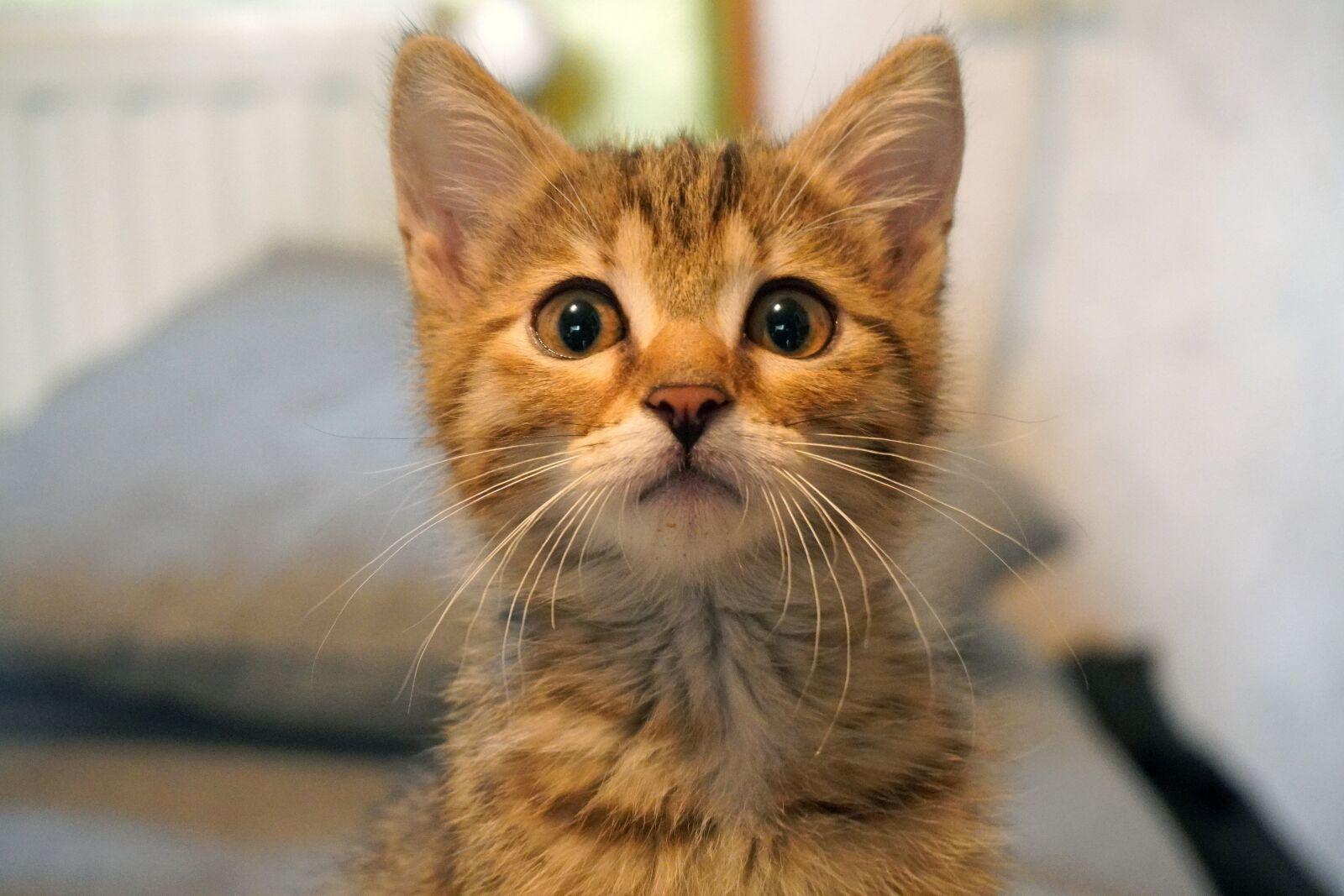 "Sony a6400 sample photo. ""Cat, kitten, pet"" photography"