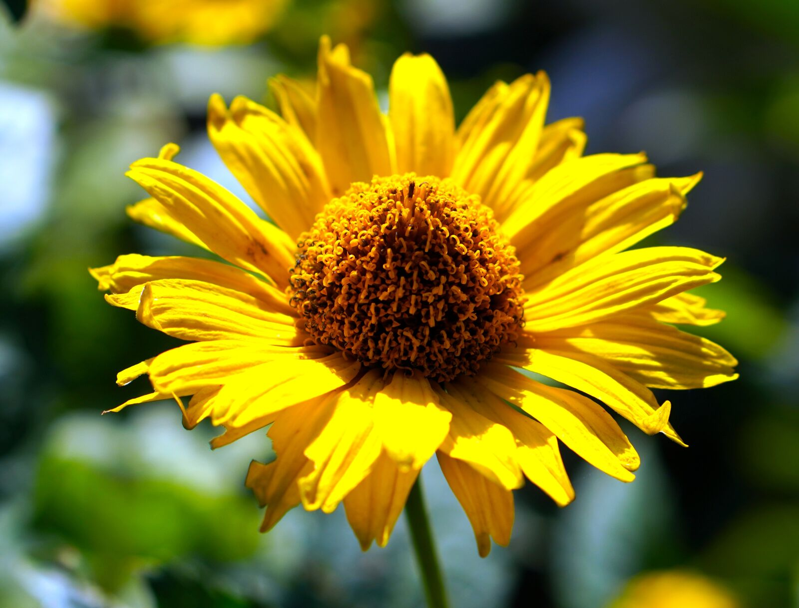 """Sony a6400 sample photo. """"Flower, yellow flower, blossom"""" photography"""