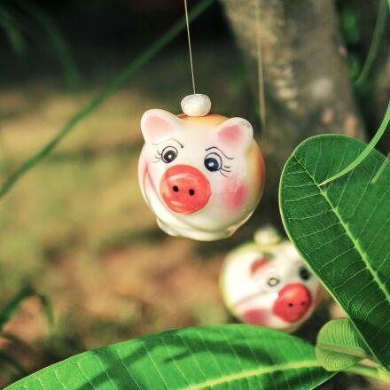 pig, garden, nature, Canon EOS M10
