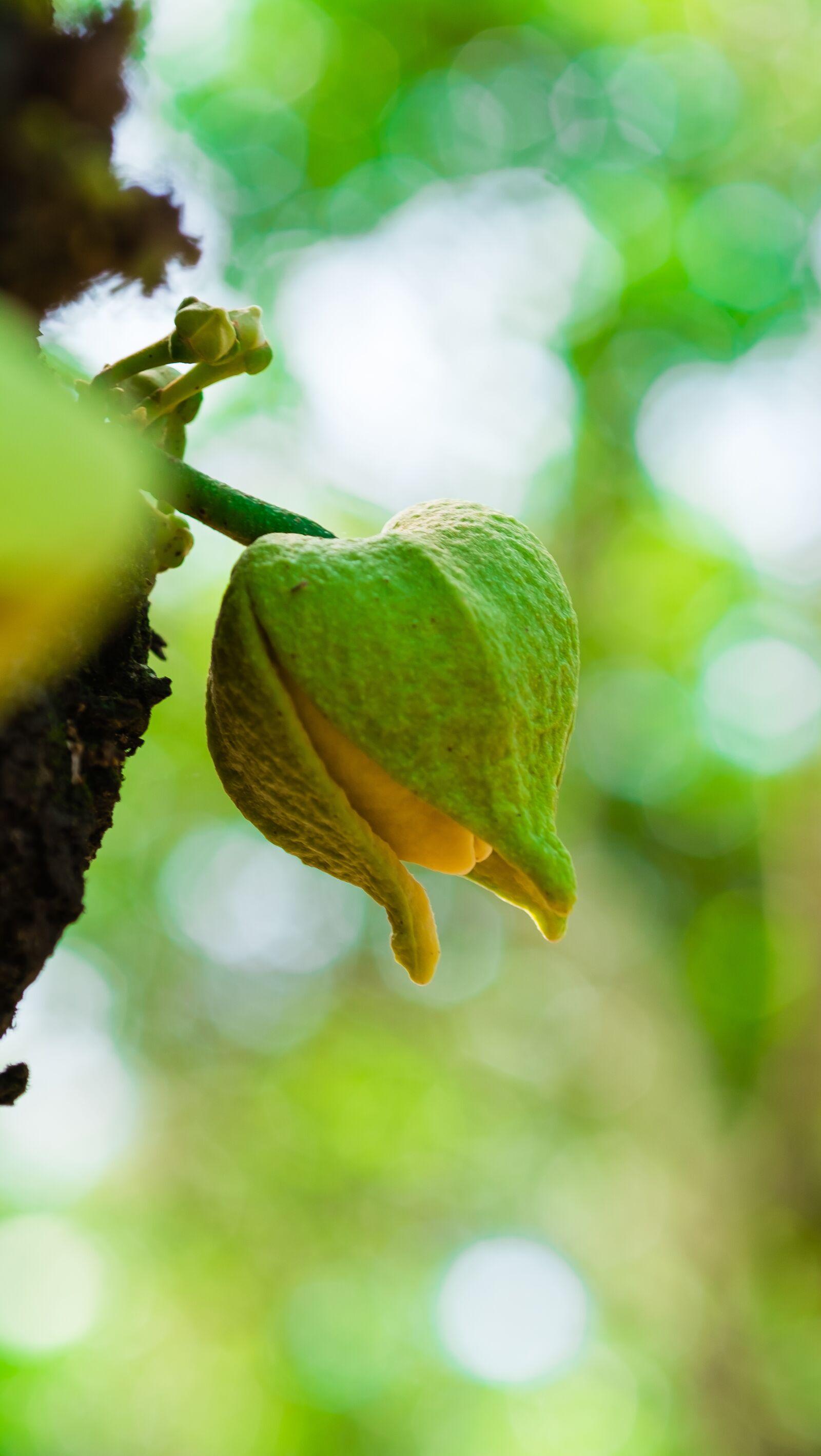 "Fujifilm X-E1 sample photo. ""Flower, nature, garden"" photography"