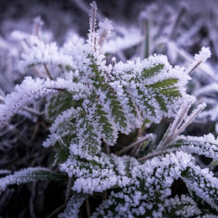 frost, ice, cold, Sony ILCE-6000