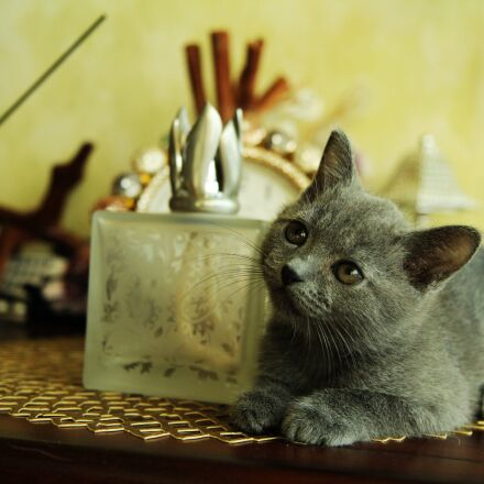 cat, baby cats, cute, Canon EOS 600D
