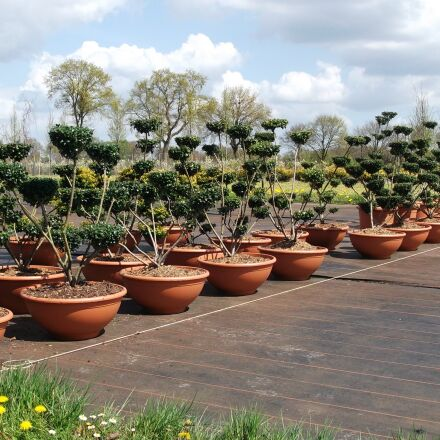 garden, plant, flowers, Fujifilm FinePix JV200