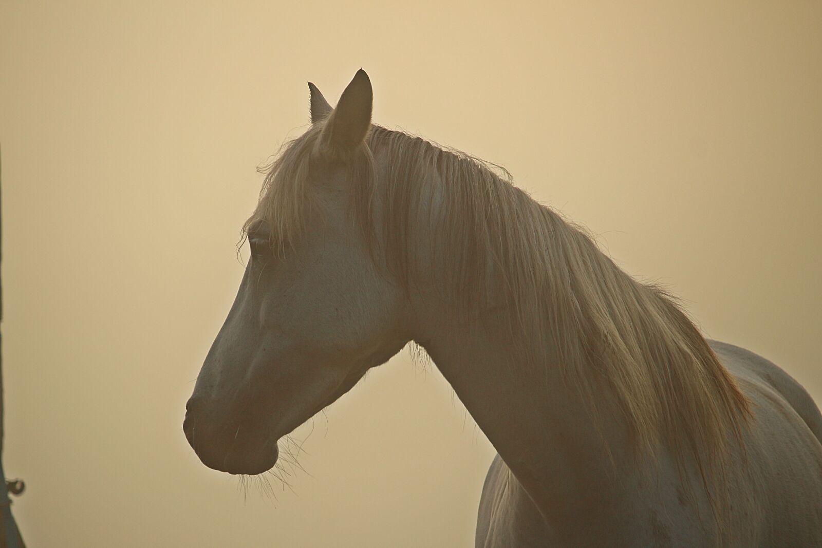 "Canon EOS 100D (EOS Rebel SL1 / EOS Kiss X7) sample photo. ""Horse, fog, morgenstimmung"" photography"