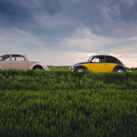 automobile, automotive, beetles, Canon EOS 5D