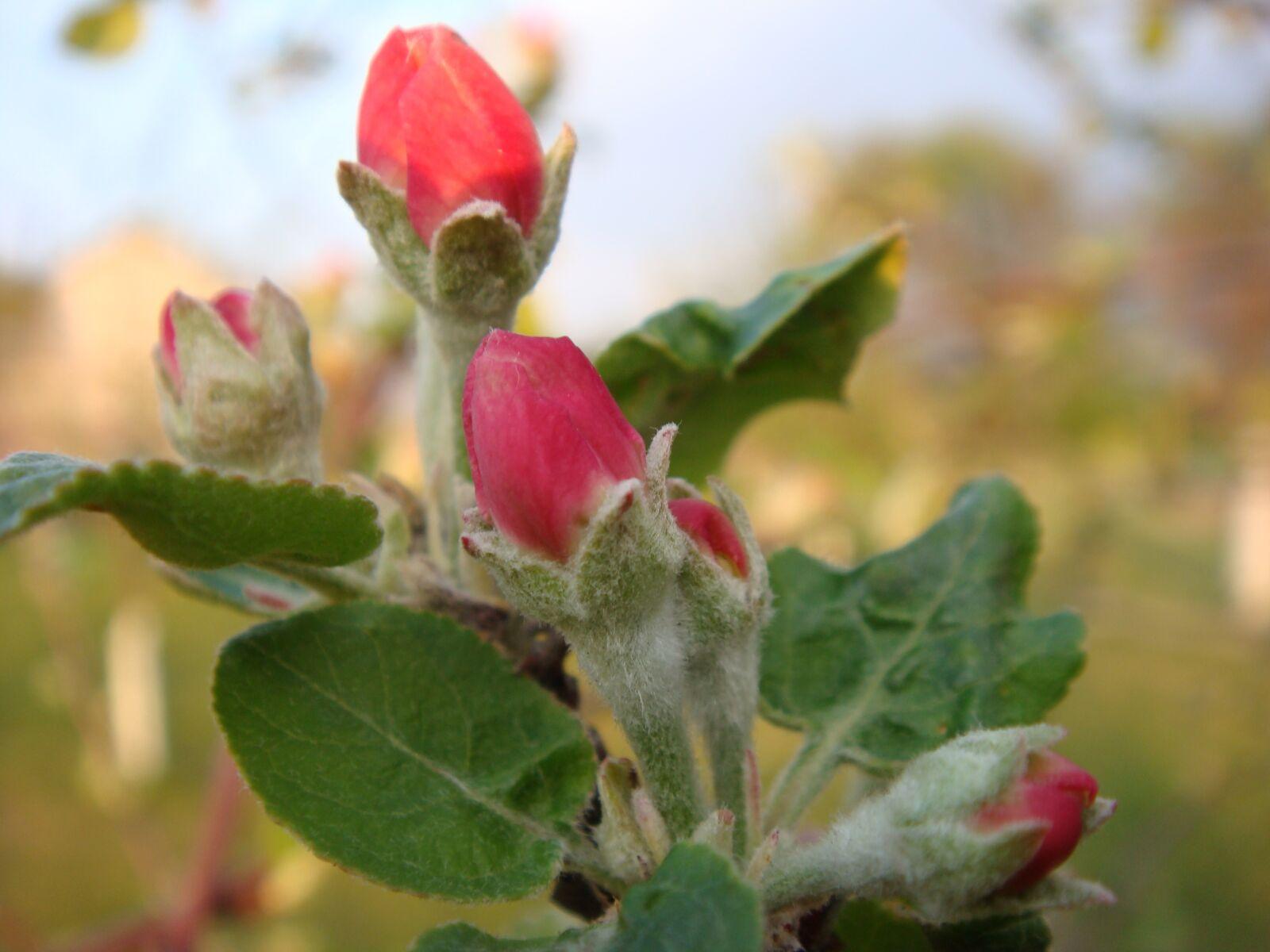 flowers, apple tree, sprig