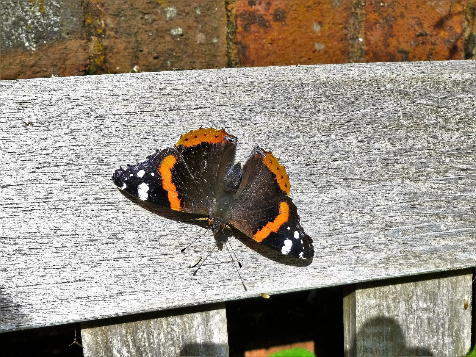 """Panasonic DMC-FH20 sample photo. """"Red admiral, butterfly, admiral"""" photography"""