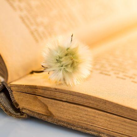 old book, small dandelion, Canon EOS 750D