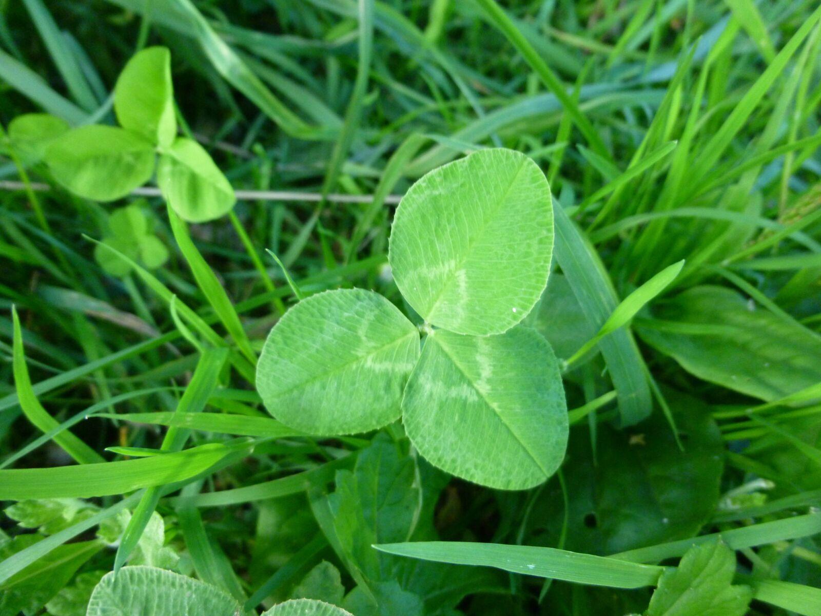 """Panasonic DMC-SZ3 sample photo. """"Four leaf clover, green"""" photography"""