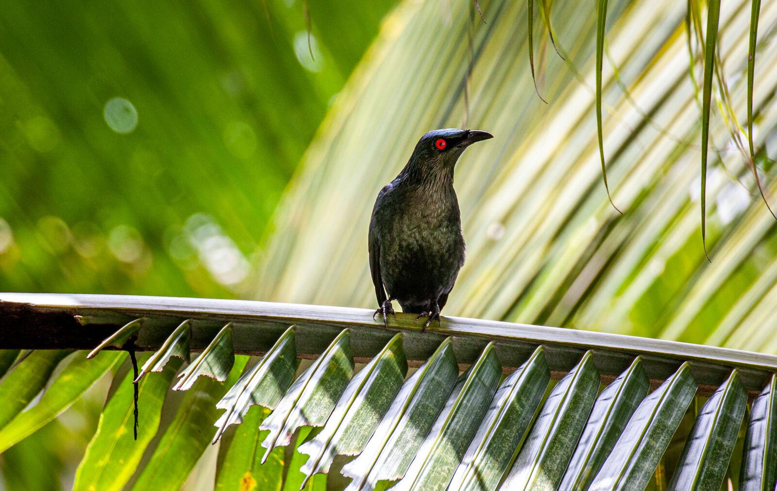 BIRD ON GREEN