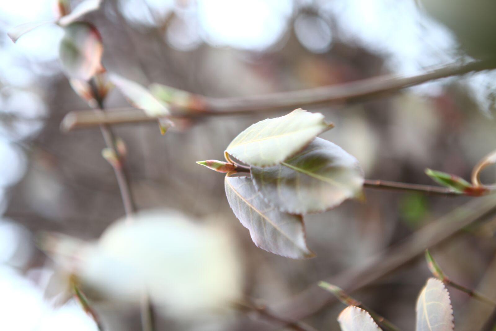 "Canon EOS 5D Mark II sample photo. ""Nature, landscape, winter"" photography"