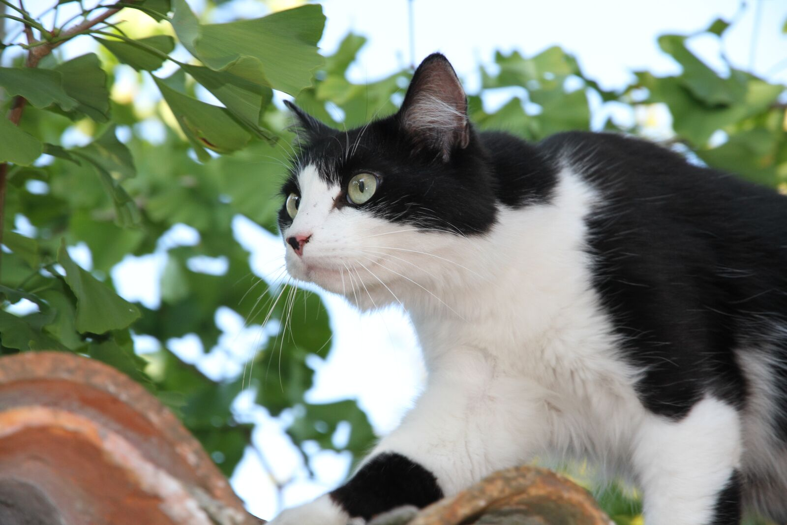"""Canon EOS 7D sample photo. """"Cat, roof, leaves"""" photography"""