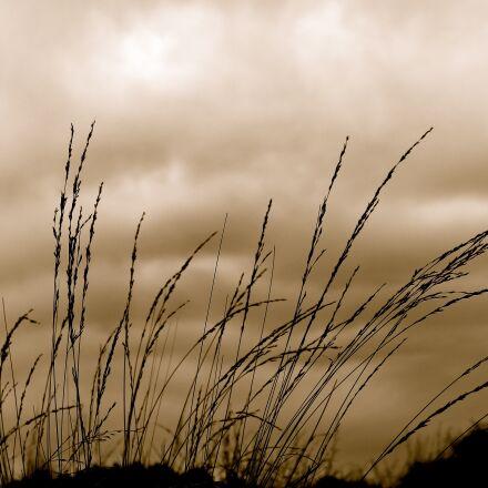 grass, sky, wind, Canon EOS 1100D