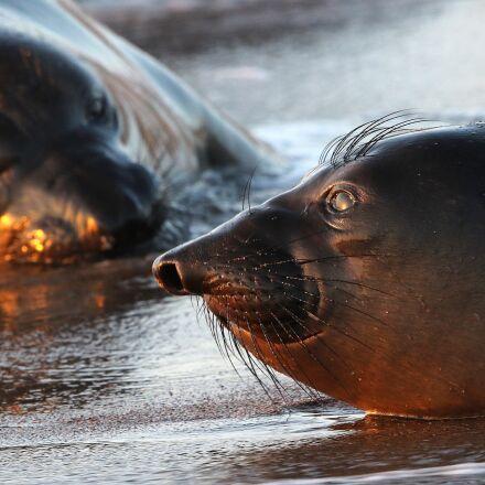 seals, beach, portrait, Canon EOS 7D MARK II