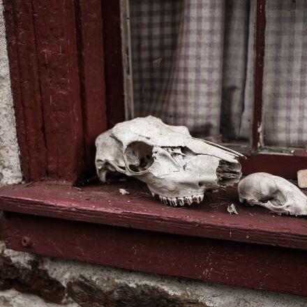animal skulls, skeleton, skulls, Canon EOS 6D
