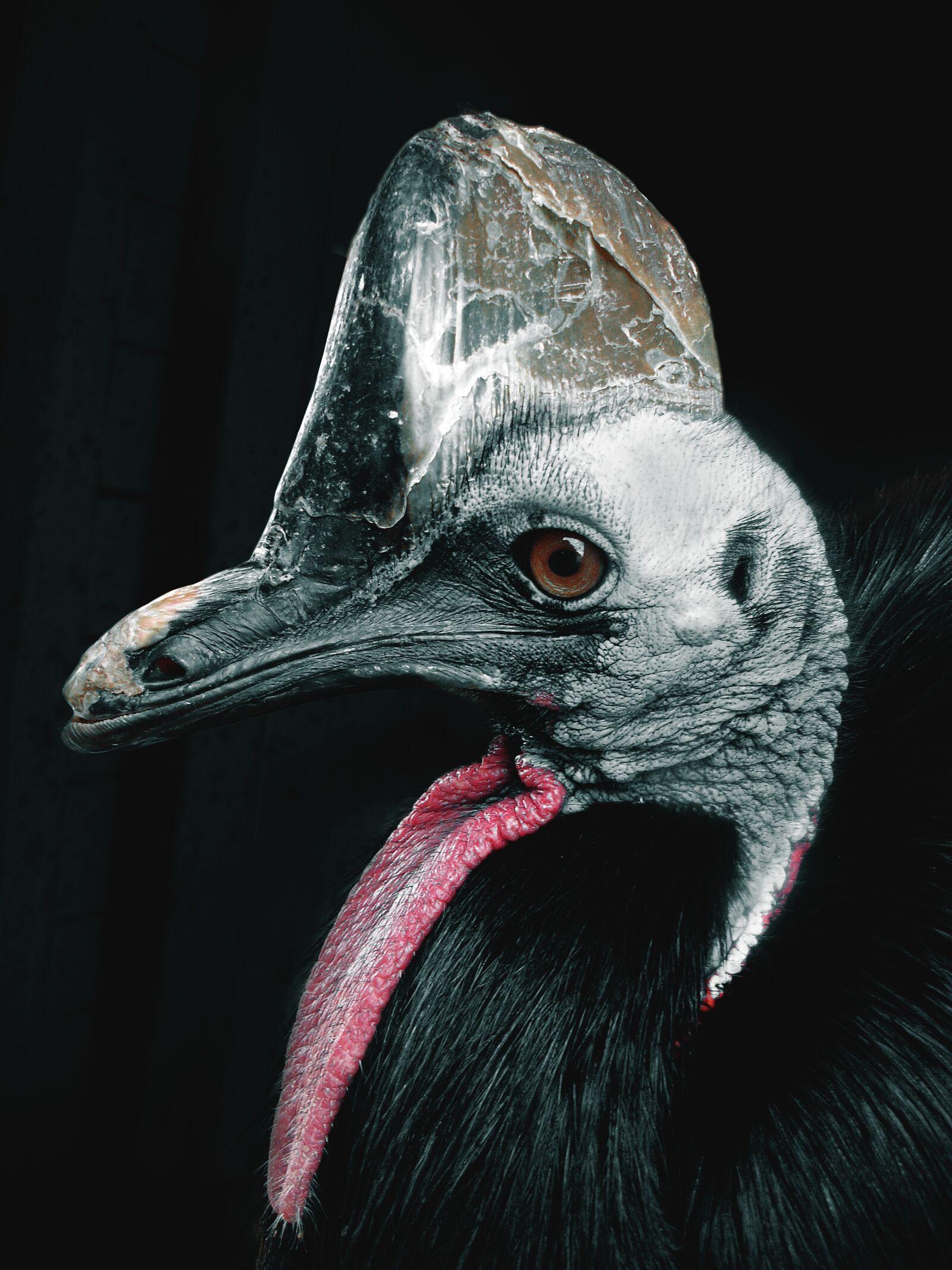 bird, beak, feather