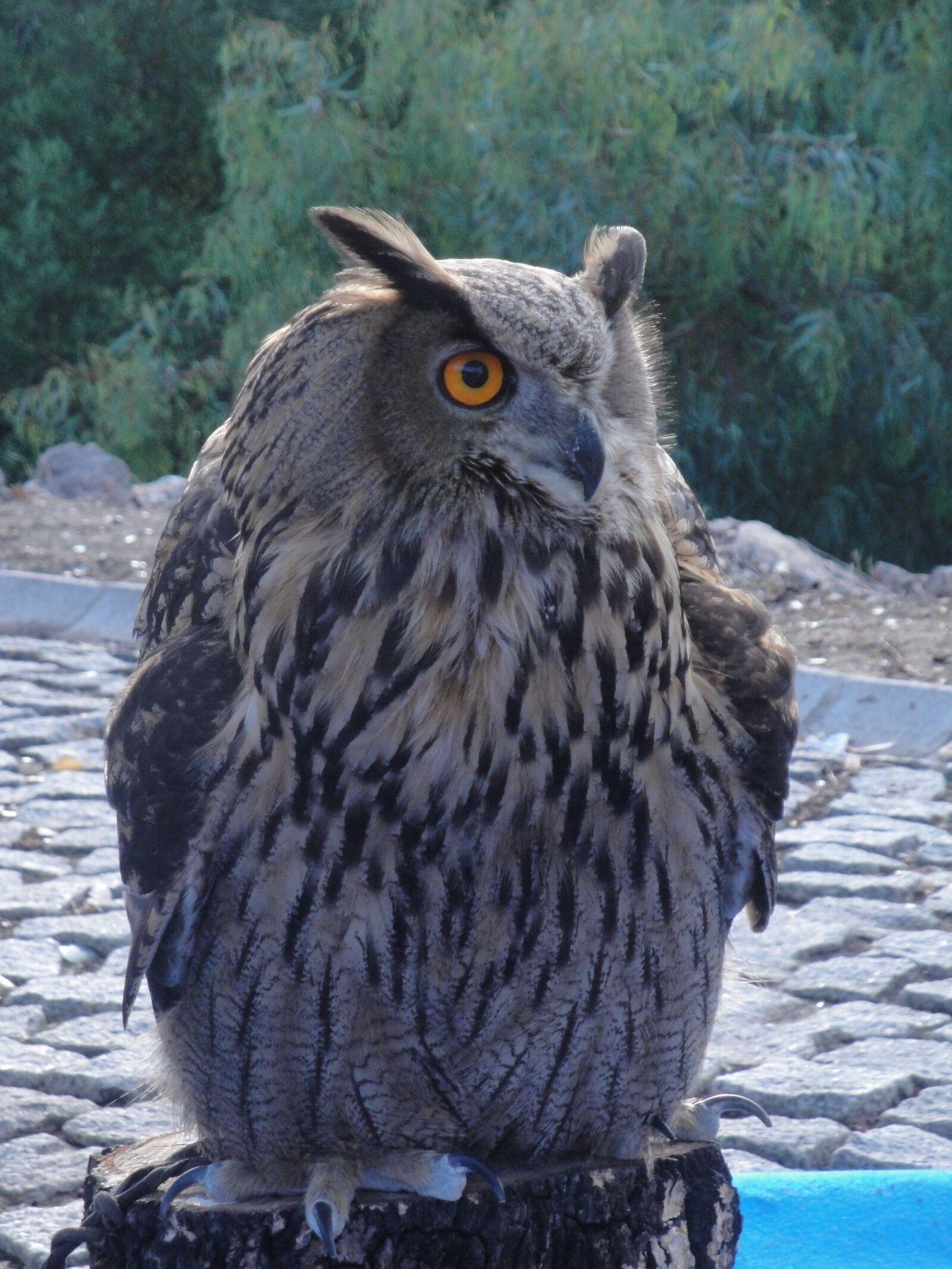 owl, eagle owl, ave