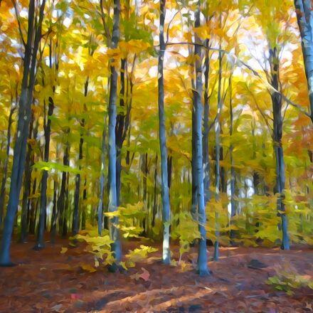 forest, autumn, watercolor, Sony DSC-WX300