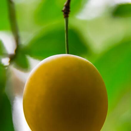 fruit, green, mirabelka, yellow, Canon EOS 7D