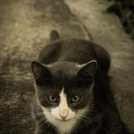 nature, village, cat, gray, Nikon D70S