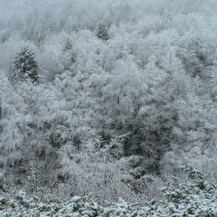frost, winter, snow, Panasonic DMC-FZ5