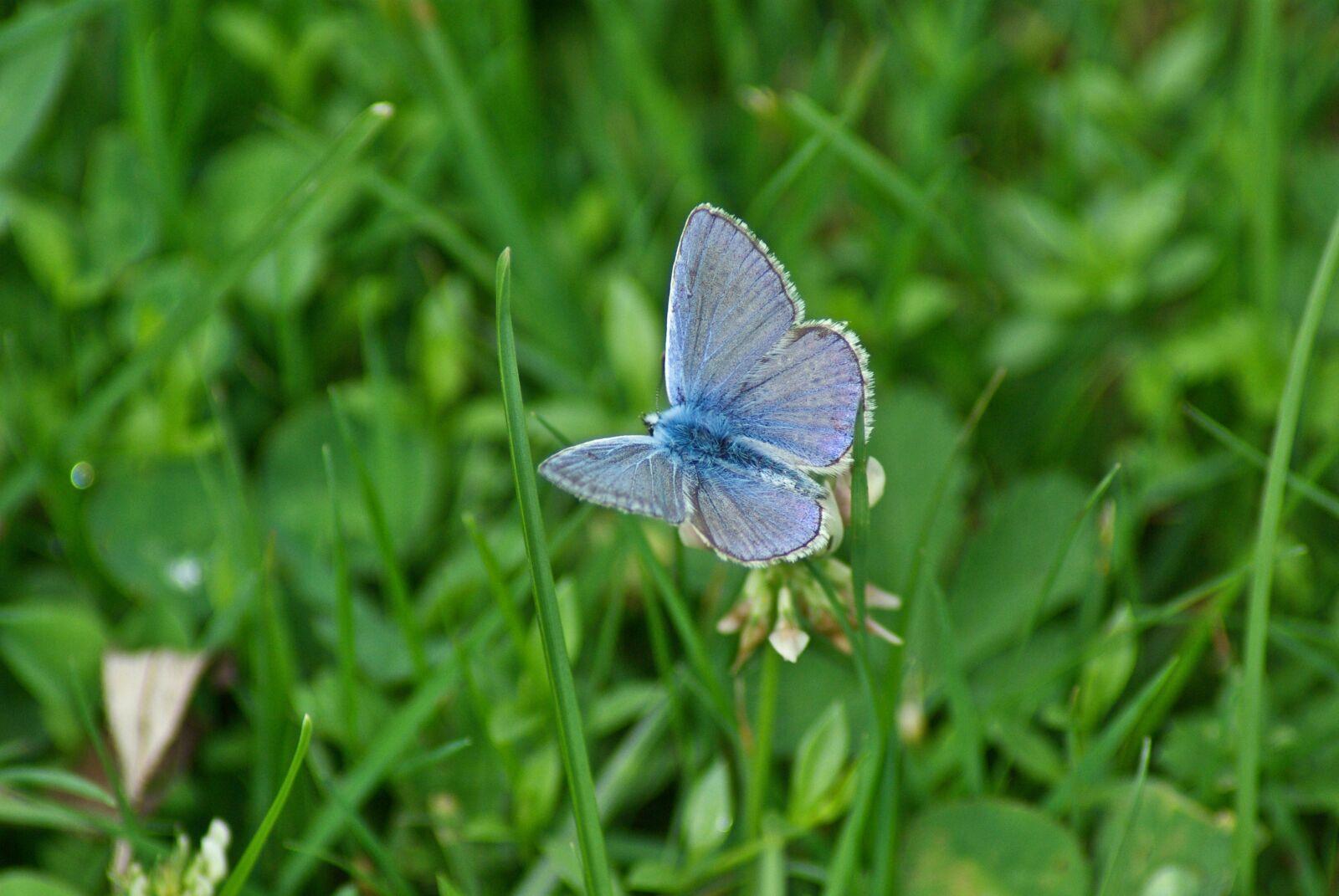 "Pentax K10D sample photo. ""Butterfly, grass, spring"" photography"