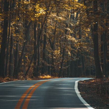 asphalt, forest, dark, Sony ILCE-6300