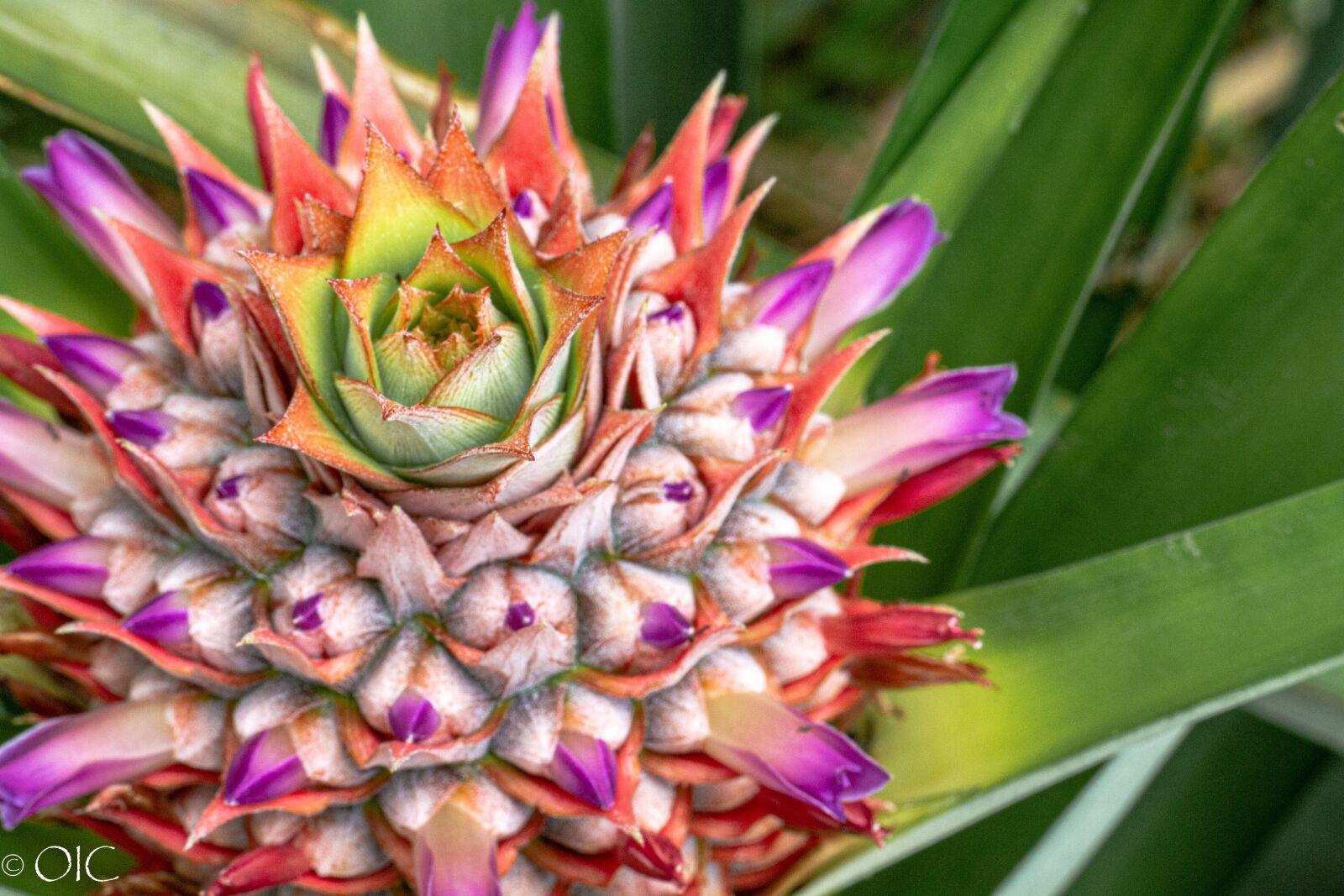"Canon EOS 7D sample photo. ""Pineapple, fruit, tropical"" photography"