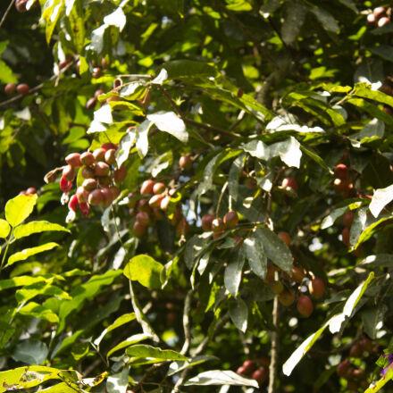 coffee, Canon EOS REBEL T5
