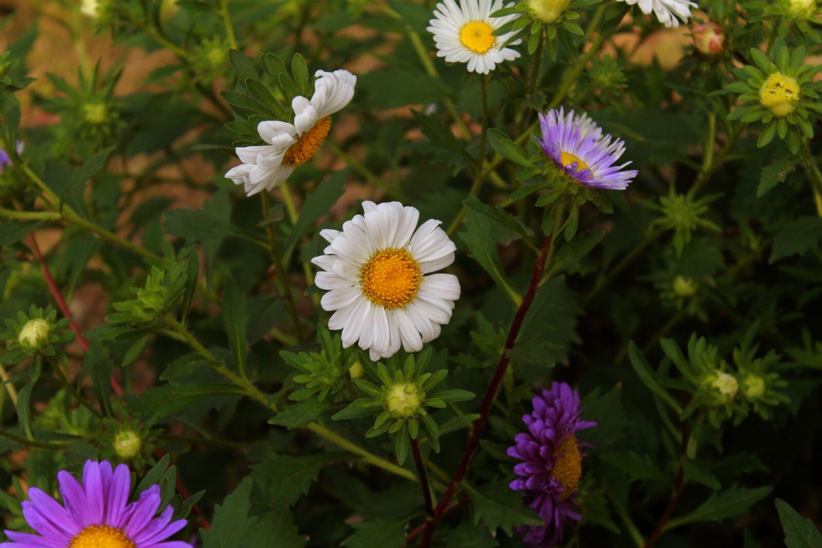 "Canon EOS 1100D (EOS Rebel T3 / EOS Kiss X50) sample photo. ""Flower, white, plant"" photography"